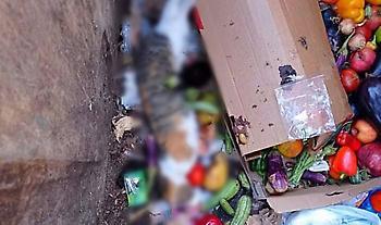 Μαζική δολοφονία αδέσποτων γατιών με φόλες σε Αιγάλεω - Γείτονες καταγγέλλουν τη δράστιδα (pics)