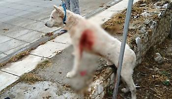 Για τις 6 Νοεμβρίου αναβλήθηκε η δίκη των ανδρών που κακοποίησαν τον σκύλο στη Νίκαια