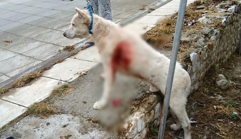 Για τις 6 Νοεμβρίου αναβλήθηκε η δίκη για τον σκύλο στη Νίκαια