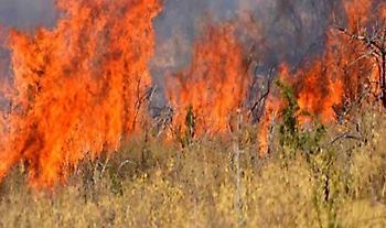 Πυρκαγιά στη Θίσβη Βοιωτίας