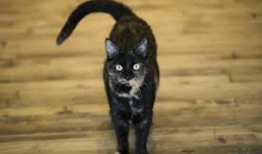 Ερευνητές εξηγούν γιατί οι γάτες αγαπούν πληκτρολόγια των υπολογιστών