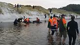 Τραγωδία: 100 φάλαινες βρήκαν το θάνατο – εξόκειλαν σε ακτές στη Νέα Ζηλανδία