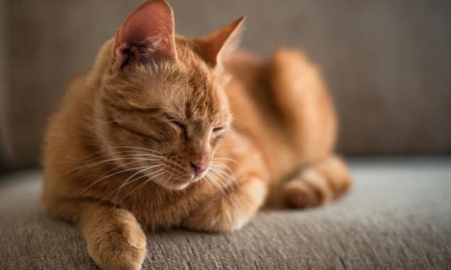 Γάτες: Είναι φορείς παράσιτου που προκαλεί καρκίνο στον εγκέφαλο