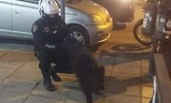 Αστυνομικοί… συνέλαβαν αγριογούρουνο που έκοβε βόλτες στην Τούμπα (pic)
