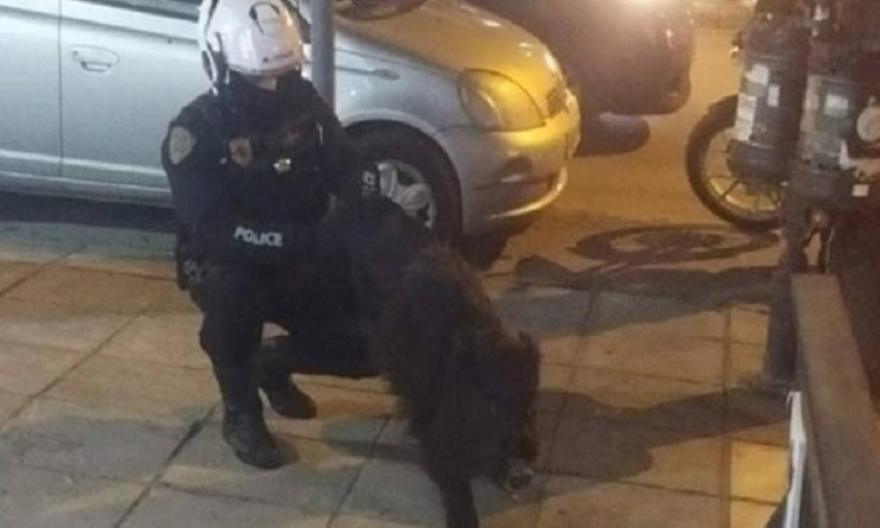 Αστυνομικοί… συνέλαβαν αγριογούρουνο που έκοβε βόλτες στην Τούμπα