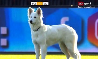 Ο σκύλος του προέδρου έκανε «ντου» σε αγώνα στην Ελβετία (video)