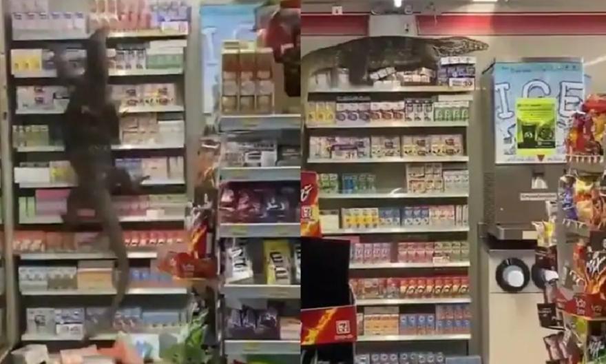 Γκοτζίλα: Τεράστια σαύρα μπούκαρε σε κατάστημα