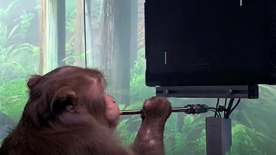Μαϊμού παίζει βιντεοπαιχνίδι μόνο μέσω του νου της