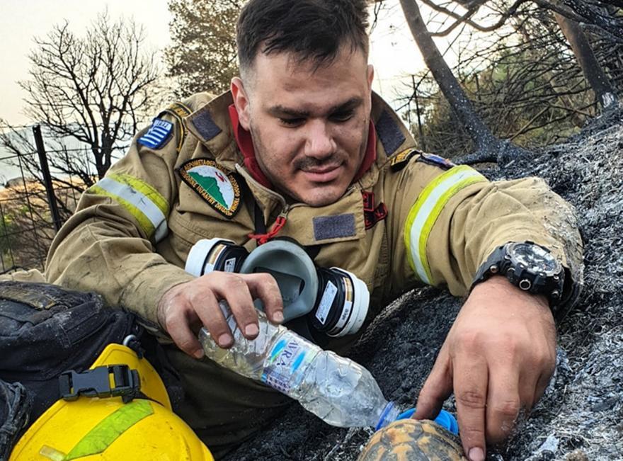Συγκινητική εικόνα πυροσβέστη να δίνει νερό σε χελώνα