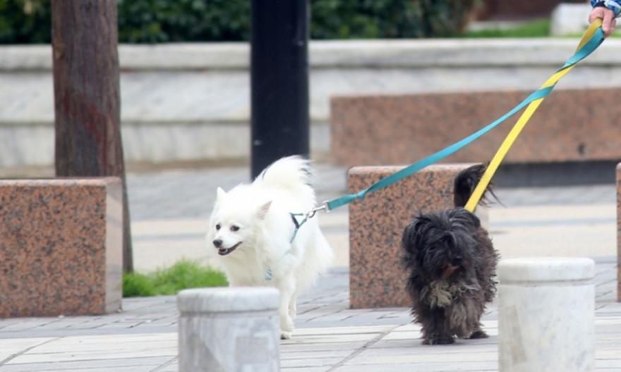 Θεσσαλονίκη: «Καμπάνες» 300 ευρώ σε 5 ιδιοκτήτες ζώων