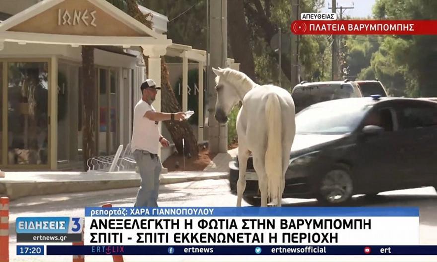 Βαρυμπόμπη: Άλογα έφτασαν στην πλατεία για να σωθούν!