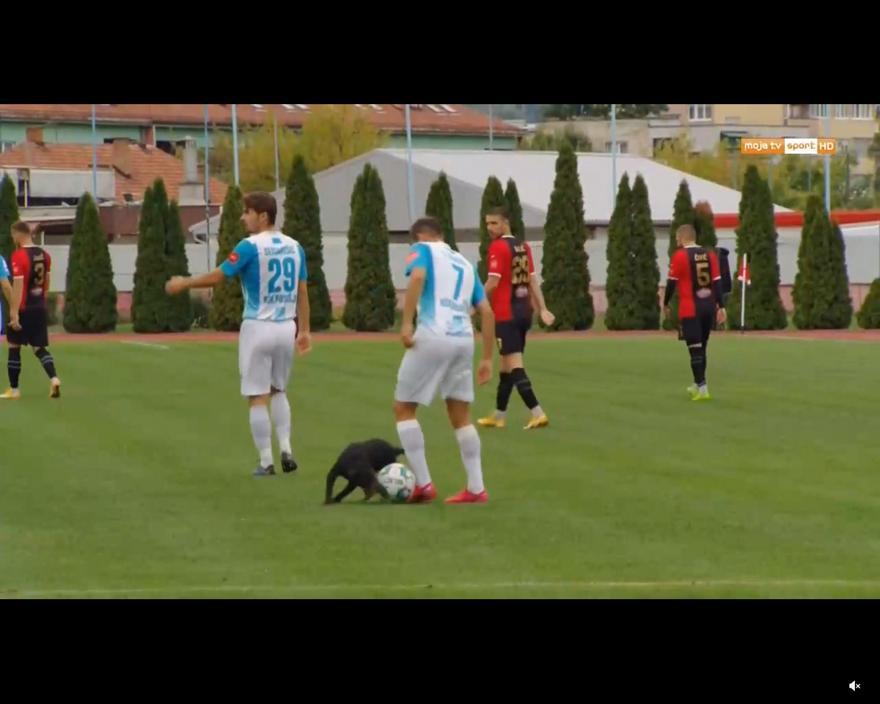 Σκύλος μπήκε σε γήπεδο
